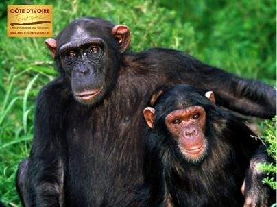 cote-divoire-6-singe